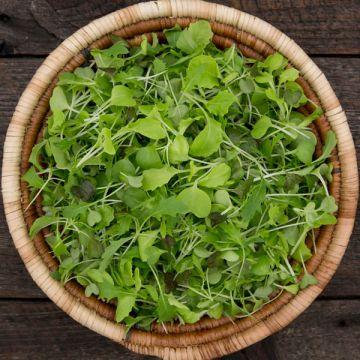Silk Road Mix Microgreens