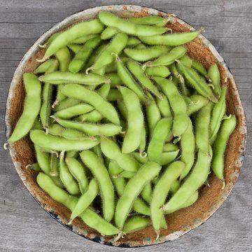 Chiba Green Soybean