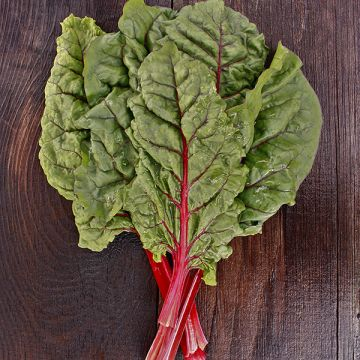 Ruby/Rhubarb Red Chard
