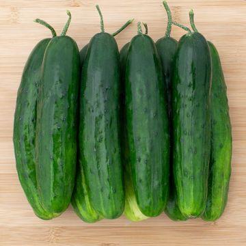Green 18 F1 Cucumber