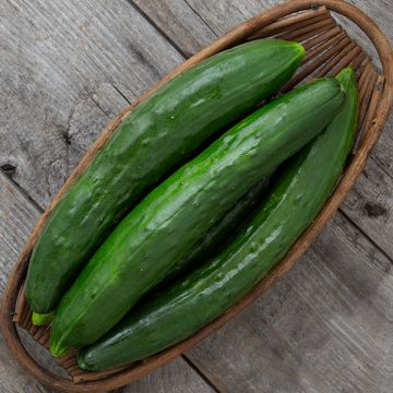 Shintokiwa Cucumber