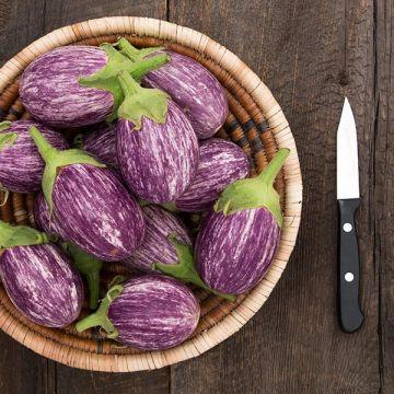 Piccolo F1 Eggplant