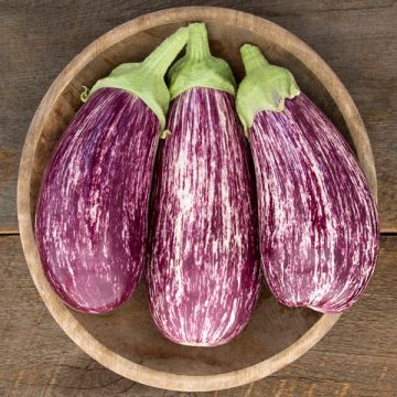Annina F1 Eggplant