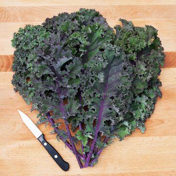 Curly Roja Kale