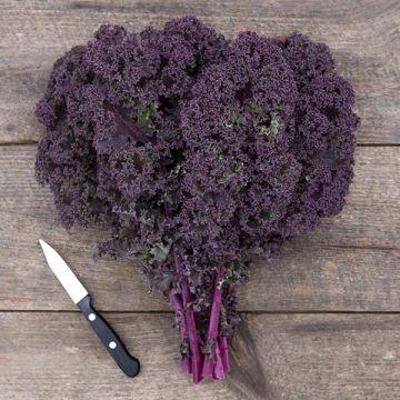 Redbor F1 Kale