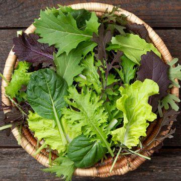 Kaleidoscope Mix Salad Mix