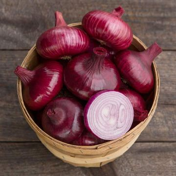 Red Geneva Onion