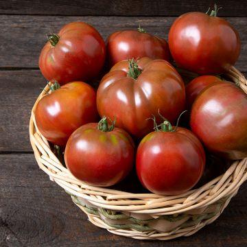 CubaLibre F1 Tomato