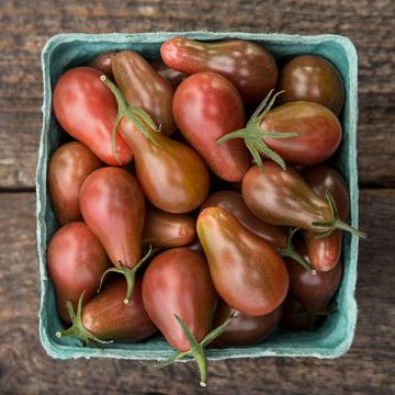 Midnight Pear Cherry Tomato