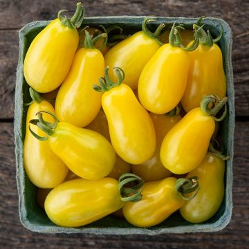 Moonbeam Grape Tomato