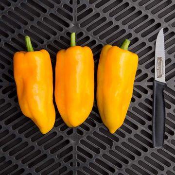 Escamillo F1 Sweet Pepper
