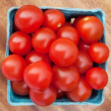 Tomato Seed - Certified Organic Non-GMO Seed from High Mowing