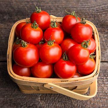 Mountain Magic F1 Tomato