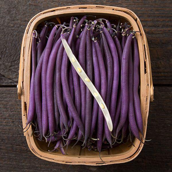 Organic Non-GMO Celine Bush Bean