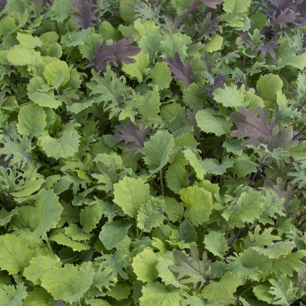 Ironman Kale Mix Salad Mix