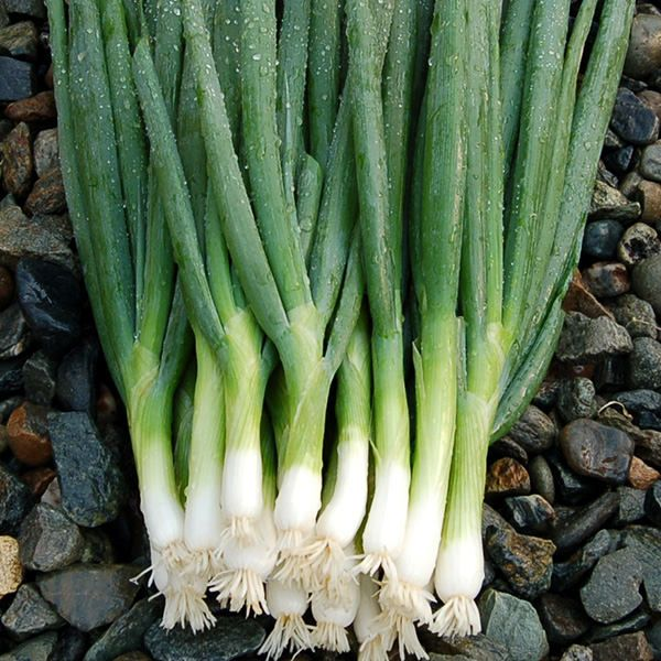 Parade Bunching Onion
