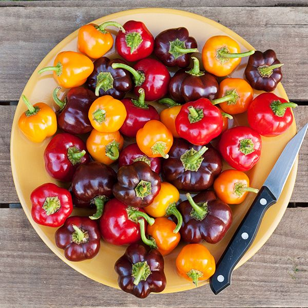 Bangles Blend Pepper