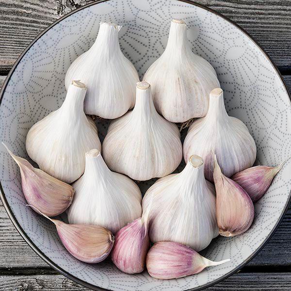 Organic Music//Porcelain Garlic