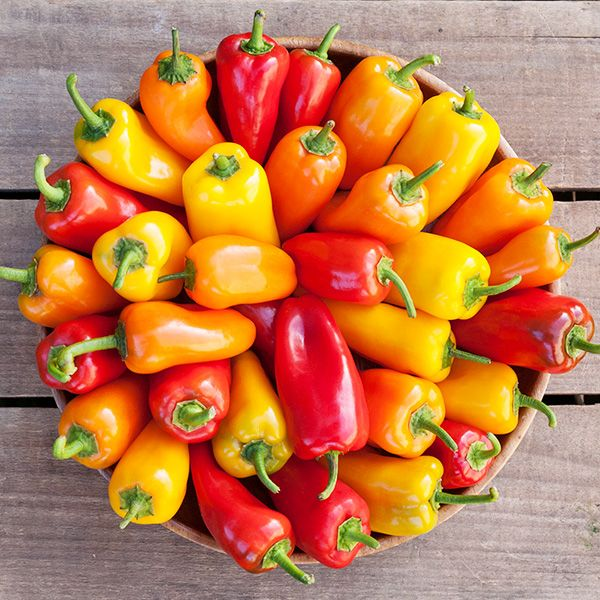 SuperCombo Medium Hot Pepper Seed Collection-105 Diff Rare//Tasty Types!