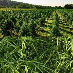 Hemp Mix Cover Crop