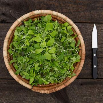 Silk Road Mix Microgreens