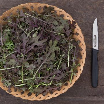 Red Lace Mustard Greens