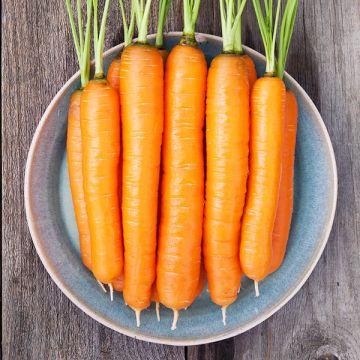 Organic Non-GMO Napoli F1 Carrot Pelleted.jpg