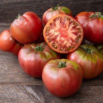 Cherokee Carbon F1 Tomato