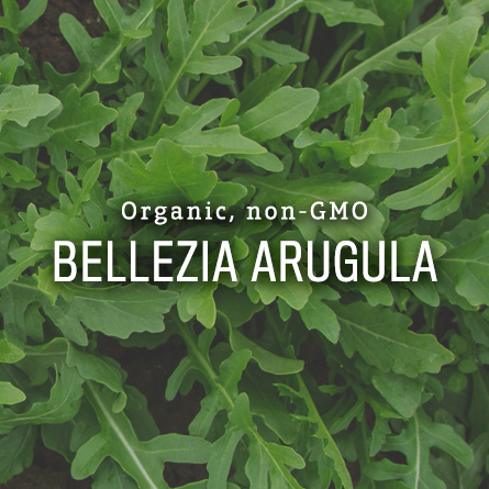 Organic Non-GMO Bellezia Arugula from High Mowing Organic Seeds