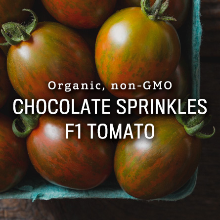 Organic Non-GMO Chocolate Sprinkles F1 Tomato from High Mowing Organic Seeds