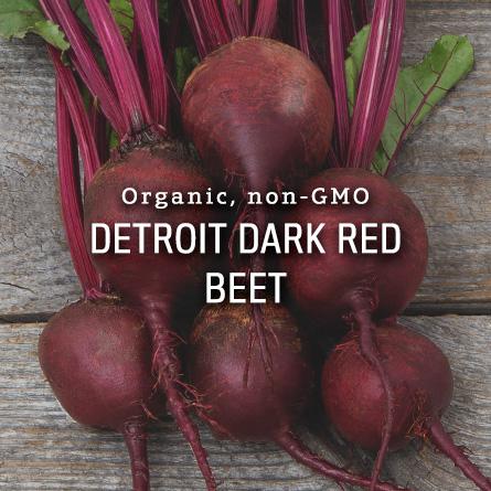 Organic Non-GMO Detroit Dark Red Beet from High Mowing Organic Seeds