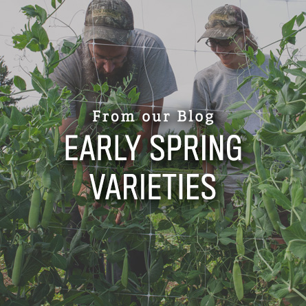 Early Spring Varieties from High Mowing Organic Seeds blog
