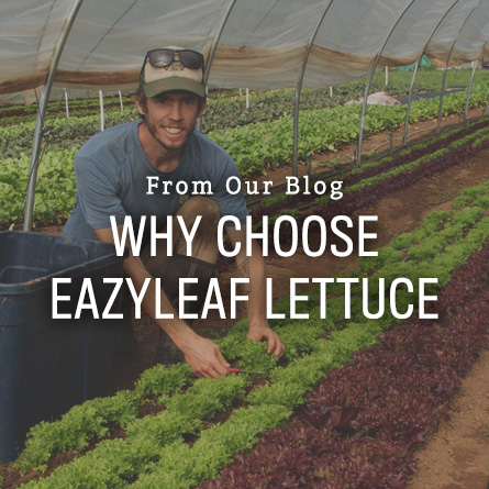 Organic Non-GMO One-Cut Eazyleaf Lettuce from High Mowing Organic Seeds blog