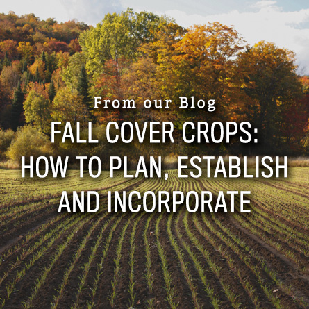 Fall Cover Crops from High Mowing Organic Seeds blog