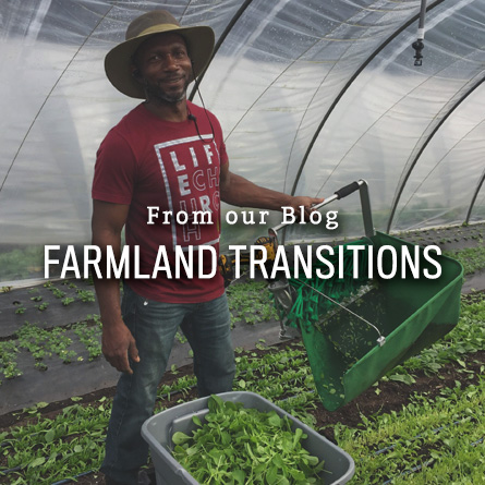 Farmland transitions from High Mowing Organic Seeds blog