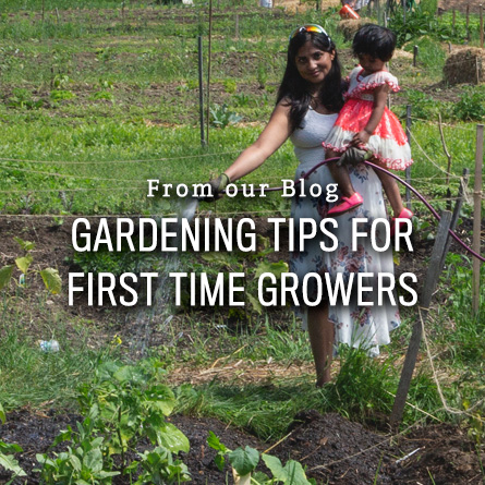 Gardening Tips for First Time Growers from High Mowing Organic Seeds blog