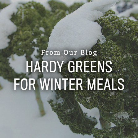Organic Non-GMO Super Hardy Greens for Winter Meals from High Mowing Organic Seeds blog