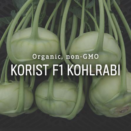 Organic Non-GMO Korist Kohlrabi from High Mowing Organic Seeds