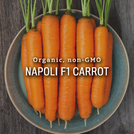 Organic Non-GMO Napoli F1 Carrot from High Mowing Organic Seeds