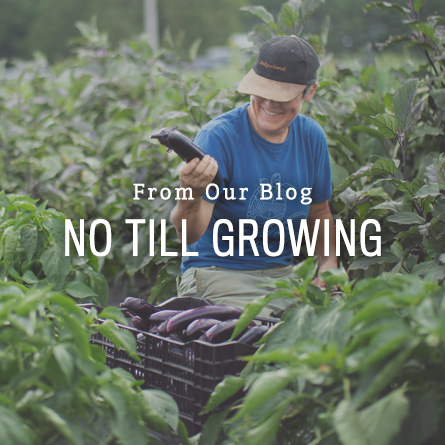 No Till Growing from High Mowing Organic Seeds blog