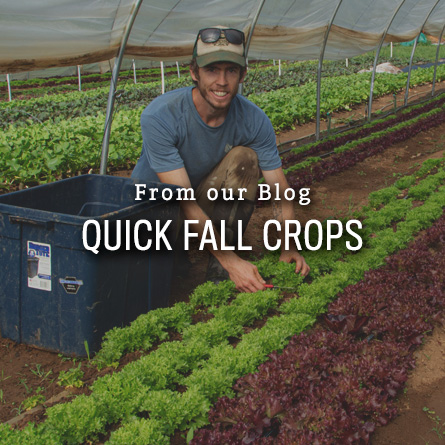 Quick Fall Crops from High Mowing Organic Seeds blog
