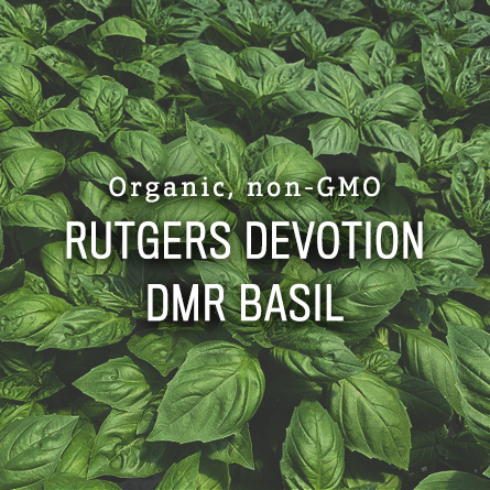 Organic Non-GMO Rutgers Devotion DMR Basil from High Mowing Organic Seeds