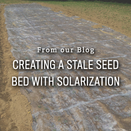 Creating a Stale Seedbed with Solarization from High Mowing Organic Seeds blog