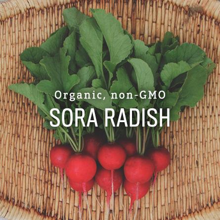 Organic Non-GMO Sora Radish from High Mowing Organic Seeds
