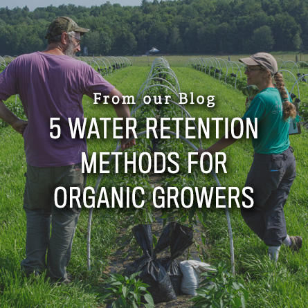 5 Water Retention Methods for Organic Growers from High Mowing Organic Seeds blog
