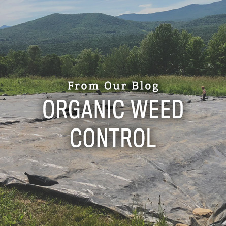 Organic Weed Control from High Mowing Organic Seeds