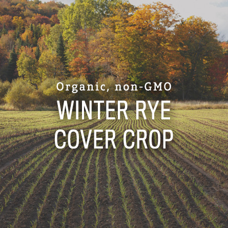 Organic Non-GMO Winter Rye from High Mowing Organic Seeds