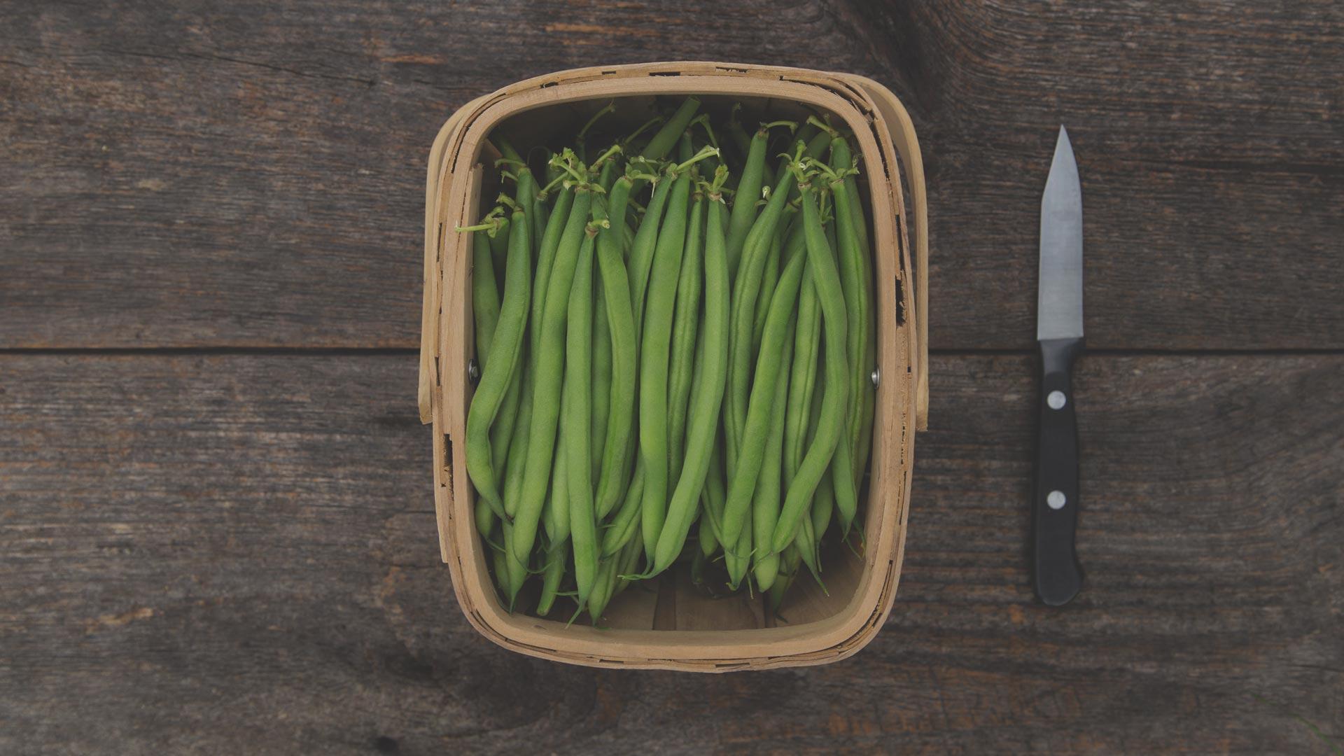 Organic Non-GMO Antigua Bush Bean from High Mowing Organic Seeds