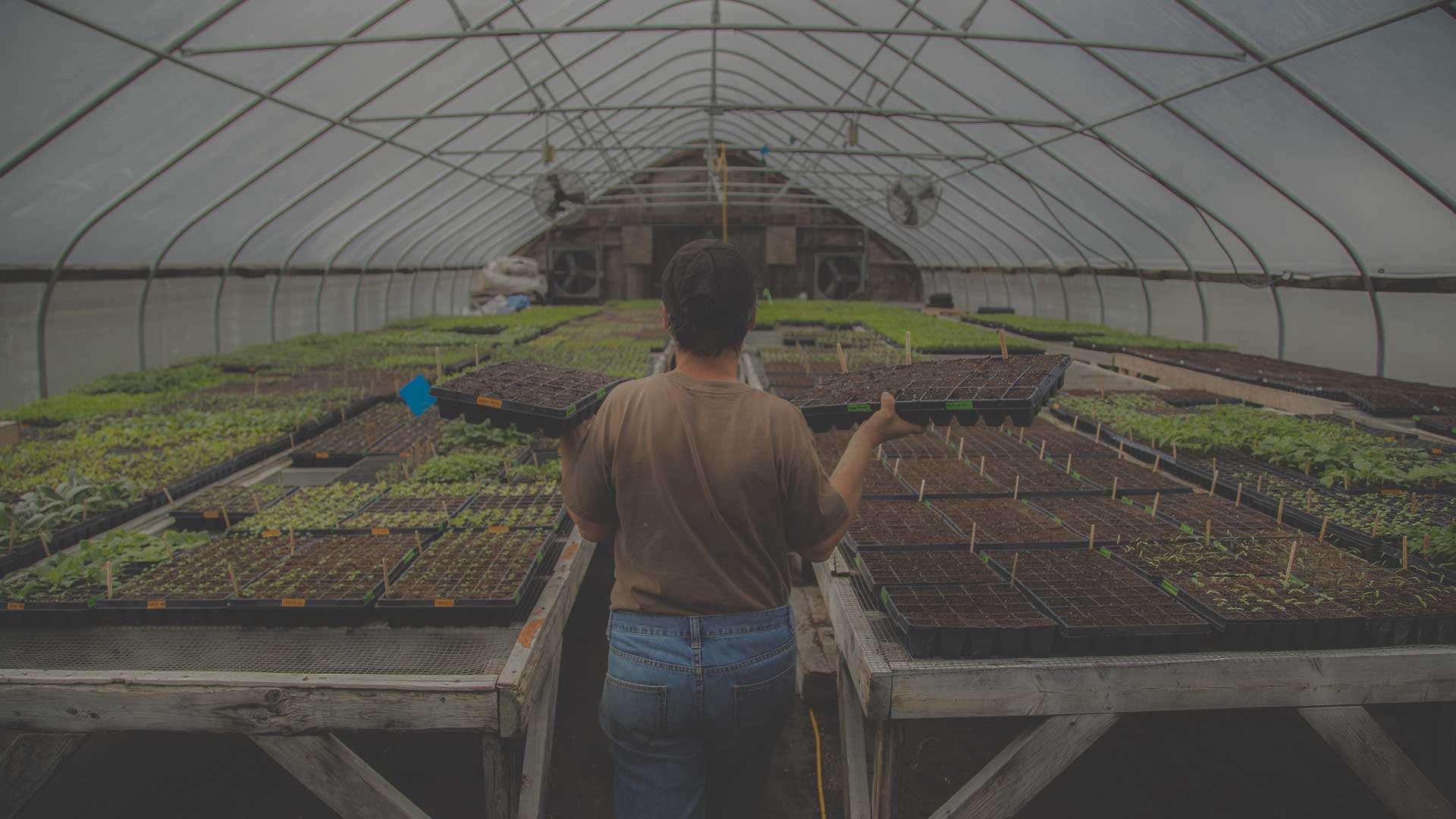 Safe Organic Non-GMO Seeds and Safe Workers from High Mowing Organic Seeds blog