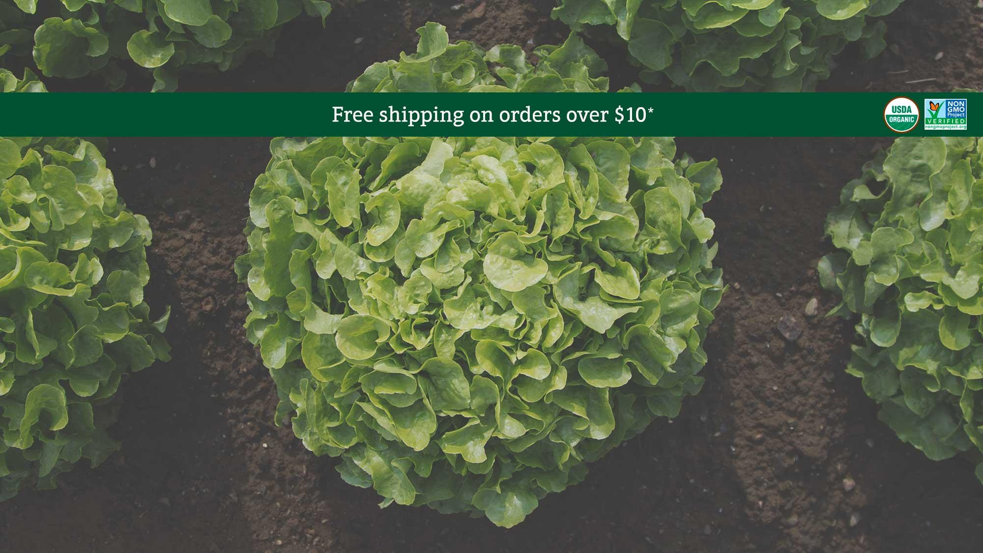 Organic Encino Lettuce Seed